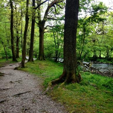 Grasmere Woodland Walk
